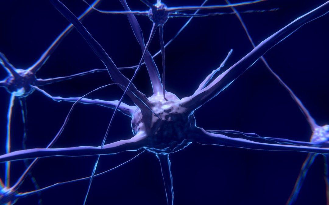 La plasticité cérébrale au cœur de l'apprentissage